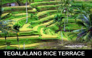 Ceking-Terrace-ubud